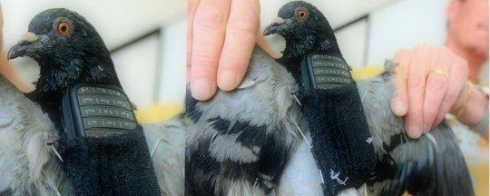 pombo com celular